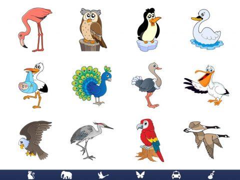 Video Touch Fåglar